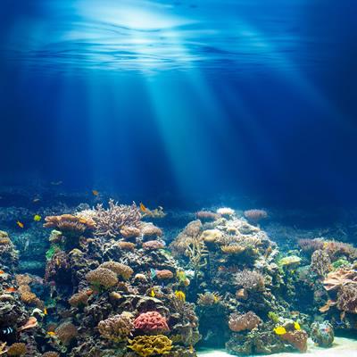 石垣島にてダイビング